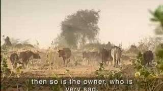 Modern Day Slaves - Niger