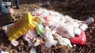 ضبط طن فراخ مجمدة منتهية الصلاحية ضبط كميات كبيرة من الدجاج الفاسد