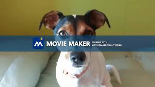 Funny Dogs Video Compilations 2019