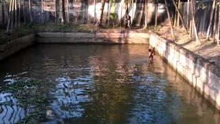 bangladeshi pond