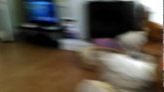 Dog barking at dangerous intruder