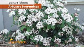 VIVERO ALEGRÍA - Arbustos Laurentinos