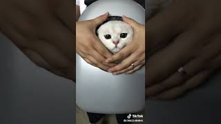 cats lovely moments - Funny Cats #1