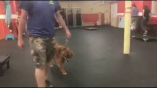 Dog Training | Arya's Drop off Session | Solid K9 Training Dog Training