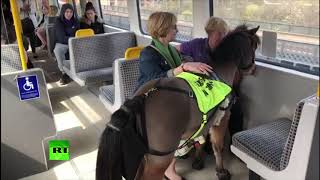 You've seen guide dogs. But have you seen a guide pony?