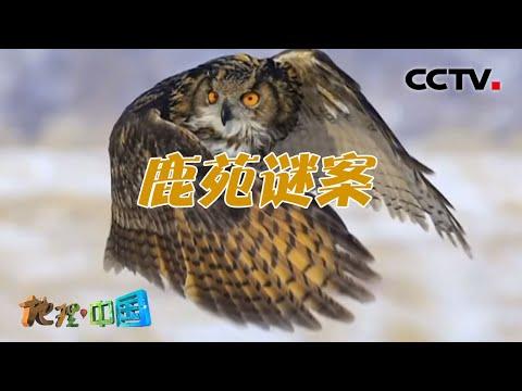 中國-地理·中國-20210804 鹿苑謎案