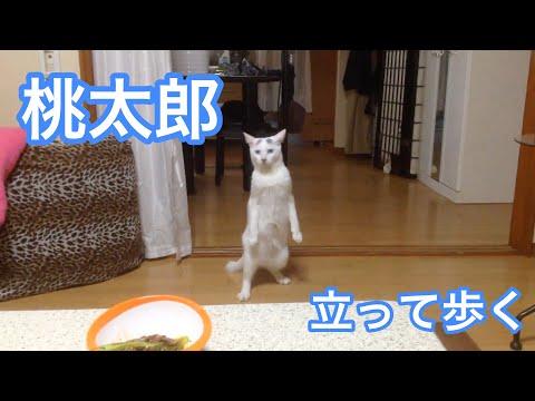 猫らしくない?!ピーンと姿勢よく立ったままバックしていく猫