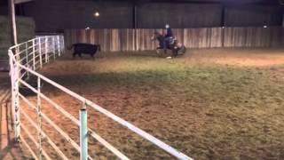 Addie- Jared Lesh Cowhorses