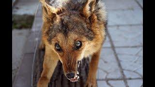 Бешеная лиса нападала на людей в центре Мозыря  - 9 пострадавших