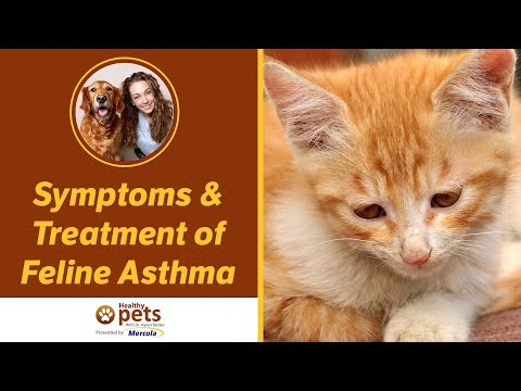 Symptoms & Treatment of Feline Asthma