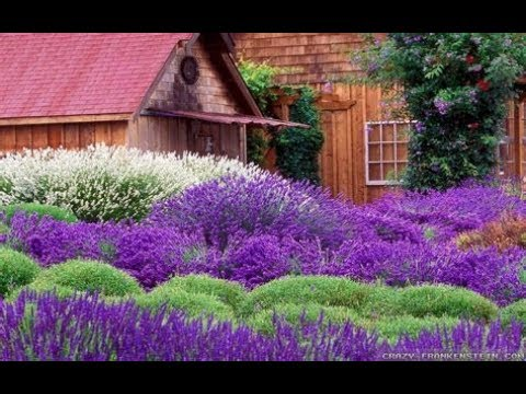 What are the differences in Lavender?/Garden Style nw