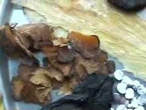 Male Sexual Potency -- A Chinese Herbal Prescription (7)