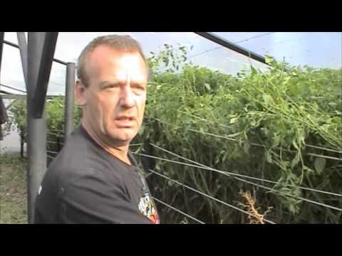 How To grow the Hottest chilli in the world part 2