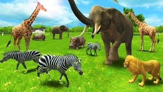 Baby Learn About Animals - Have Fun With REAL ANIMAL  Fun educational