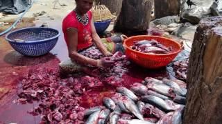 Fishing Industry - Negombo, Sri Lanka (Part 5 of 7)