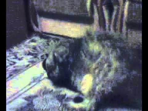 Чурка рассказывает как он ебет ишаков, куриц, собак бек ебеть ишака чурка е