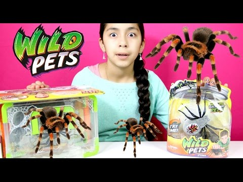 Giant Spiders Wild Pets Spiders-Electronic Pets| B2cutecupcakes