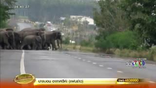 ช้างป่าเขาอ่างฤาไนตกใจเสียง ฮ. แตกฝูงวิ่งกระเจิงหวิดโจมตี จนท. ขณะผลักดันกลับเข้าป่า