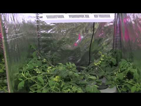 Hydroponic tomatoes Part 1 - Hydro Grow vs HTG vs Generic