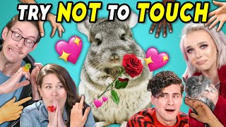 YouTube Couples Try Not To Touch Challenge (ft. a Chinchilla)
