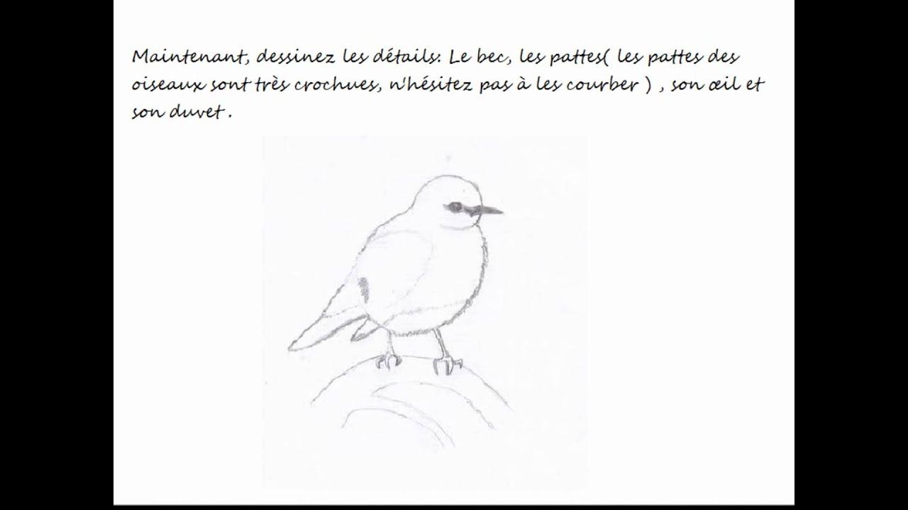 Comment dessiner un oiseau youtube - Comment dessiner un oiseau facile ...