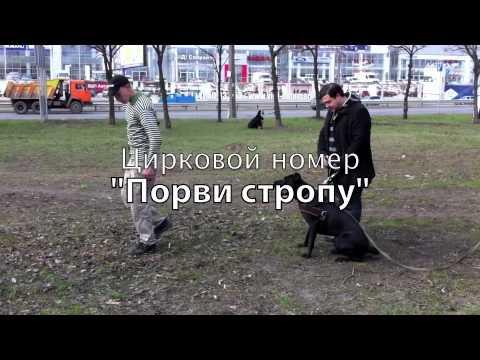 """Цирковой номер """"Порви стропу"""""""