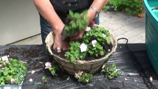 Hanging Baskets - Advanced (Impatients)