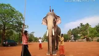 Thechikottukavu Ramachandran story