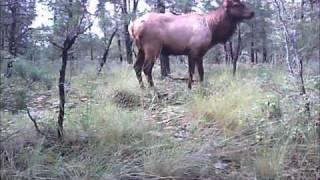 Unit 34 Elk Hunt