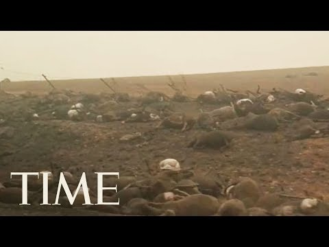 Dead Animals Line The Road In Fire-Ravaged Australia | TIME