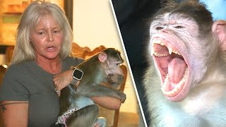 Woman Fights to Keep Emotional Support Monkeys