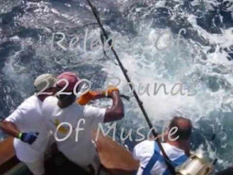 antigua sport fishing tournamant