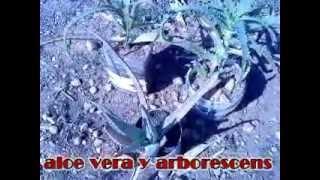 horticultura y jardinería 2011.