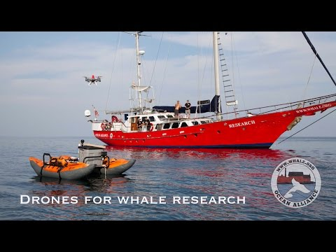 Drones For Whale Research