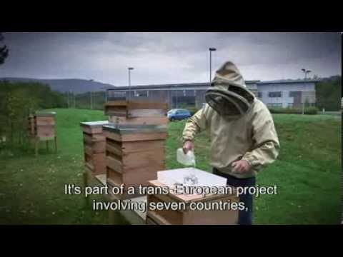 Preserving bees: fighting climate change and biodiversity loss - CAP - EU Agriculture