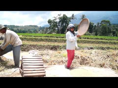 Profile Desa Wisata Cibuntu Pasawahan Kuningan Jawa Barat