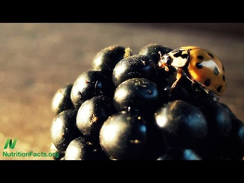 Berries vs. Pesticides in Parkinson's Disease