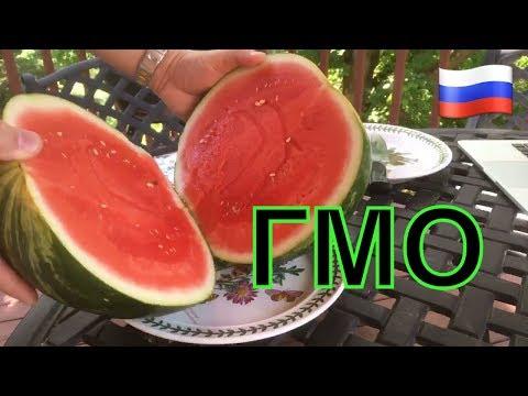 США проверка арбуза на ГМО )))