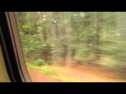 Amtrak Silver Meteor 98: Folkston, GA to Jesup, GA