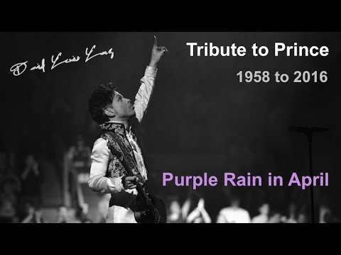 Tribute to Prince: Purple Rain in April Tribute for Prince 1958 to 2016