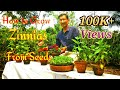 Download ZINNIA the Best Flower to Grow in Summer Months // Growing Zinnia from Seeds. in Mp3, Mp4 and 3GP