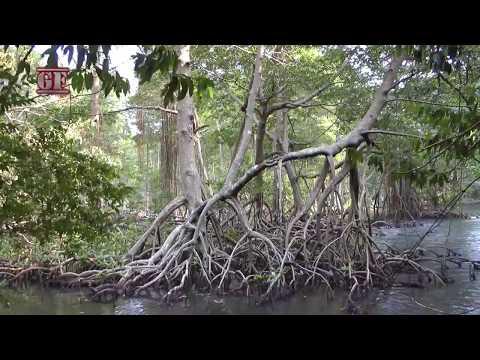 Dominican Republic - Los Haitises National Park Tour