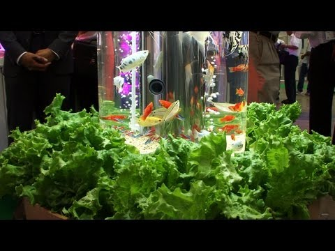 Aquaponic therapeutic indoor display #DigInfo