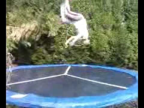 latrell 7 back flip layouts! Video