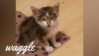 Feistiest Kittens | Try Not to Aww Challenge