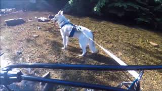 Anti bark spray  shock collars – comparisons, effectiveness and alternatives   Dog Science Explained