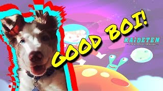 ME the good boi! | Compilation - Funny Animals #007