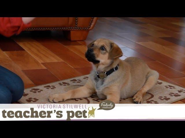 Teach a Puppy to Lie Down   Teacher's Pet With Victoria Stilwell
