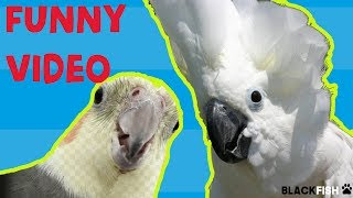 Try Not To Laugh Challenge -  BEST FUNNY PARROTS COMPILATION