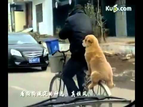 كلب يركب الدراجة مع صاحبه